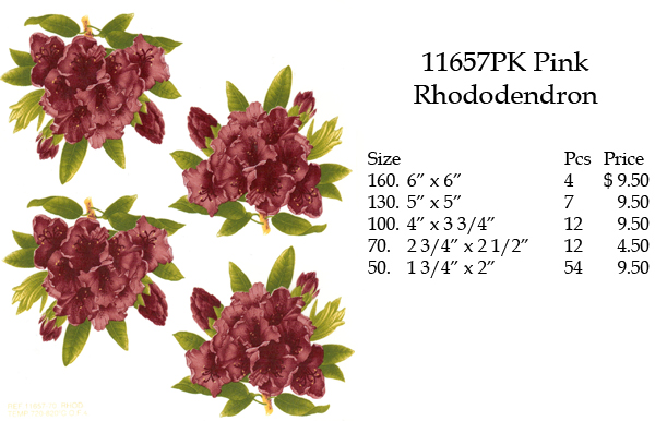 11657PK Pink Rhododendron