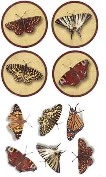 81141A Butterfly Assortment