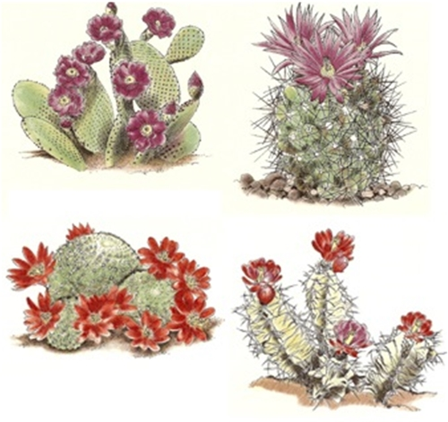OLK015350 Cactus Assortment