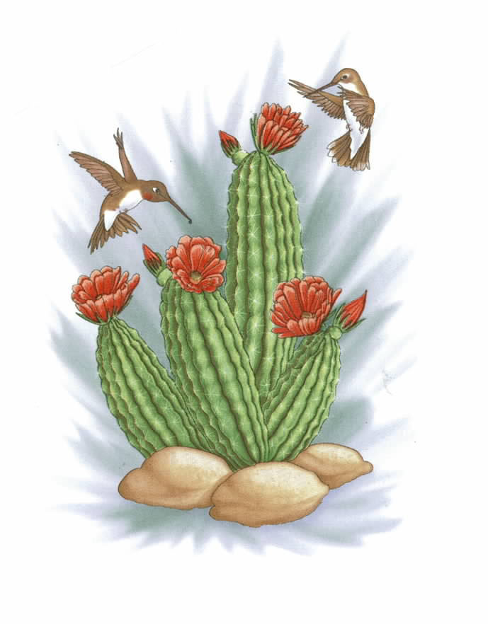 OLN628 CACTUS AND HUMMINGBIRDS