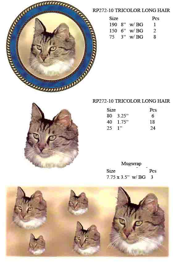 RP272-10 TRICOLOR LONG HAIR TABBY
