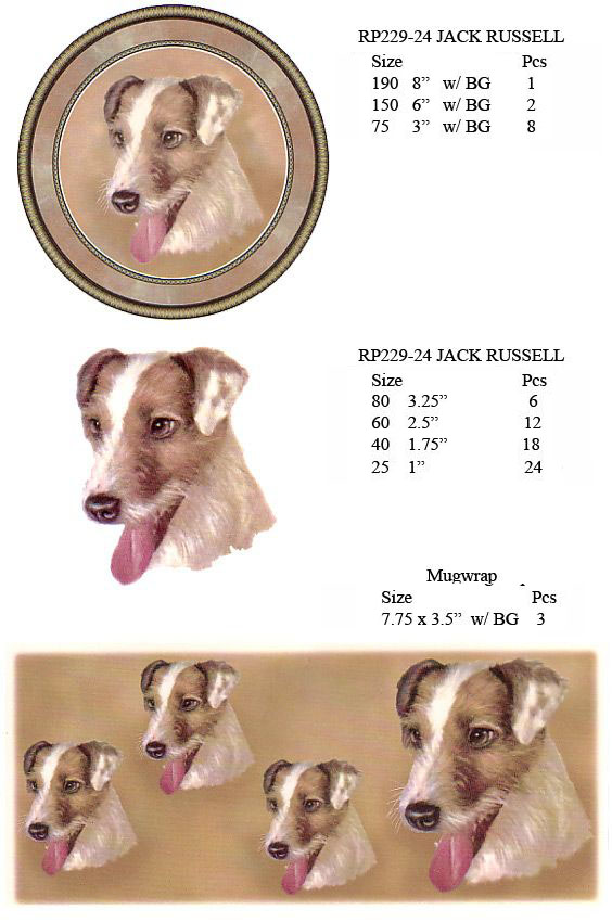 RP229-24 JACK RUSSELL